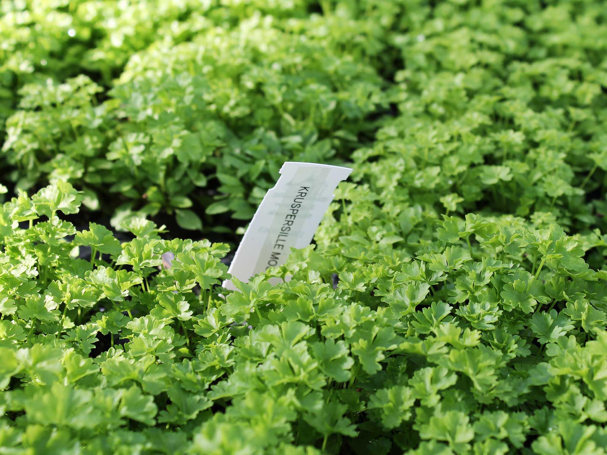 Egeskov Plantesalg